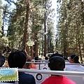 進入巨杉林區