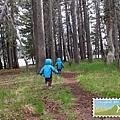 藍色小精靈穿過森林