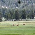 遠方吃草的鹿群 看那草原上深深淺淺的綠色,真是迷人啊