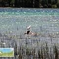 海鷗。你看那湖水的顏色層次!