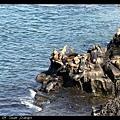 臭死人的海獅們