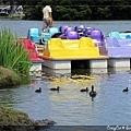 小鴨子下水遊玩