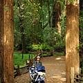 漂亮的森林步道