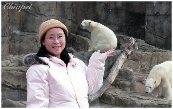 我與大白熊