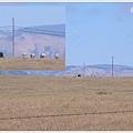 草原上的斑馬也是赫先生養的 XD