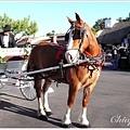 這匹馬非常和氣的樣子