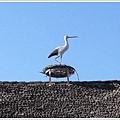 鎮上很多房子屋頂都有這種鳥(鶴?)的裝飾