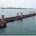 Moss Landing 舢板上的海獅疊疊樂(sea lion)
