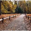 滿地的橡樹落葉也很美