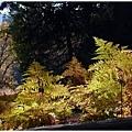 冷冷陽光下的毛絨絨蕨類,有一種奇異的美感