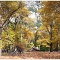 金色森林中出現一座小屋