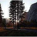 落日從大樹間隙中射出光芒