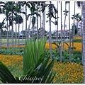 一畦畦的黃色花田很漂亮