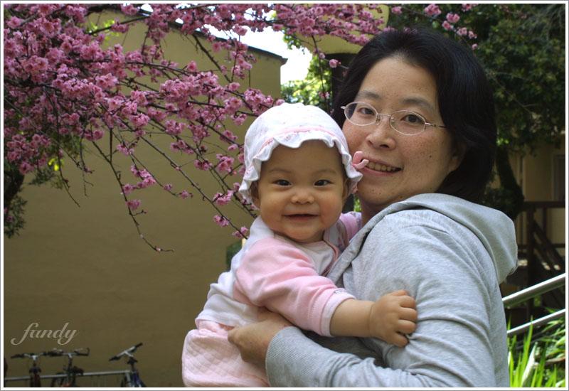 2/6 我們家附近有一棵櫻花開了!
