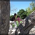 4/17 有人這樣爬樹的嗎?XD