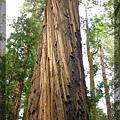 漂亮的樹質紋理