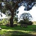 植物園內的野餐區