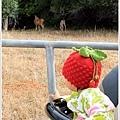 我要看鹿啦~