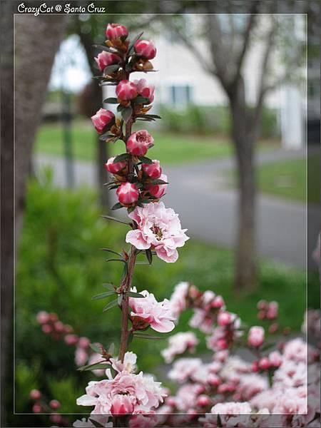 4/23 近看其實是滿秀氣的小花