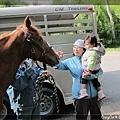 帶小牛看馬