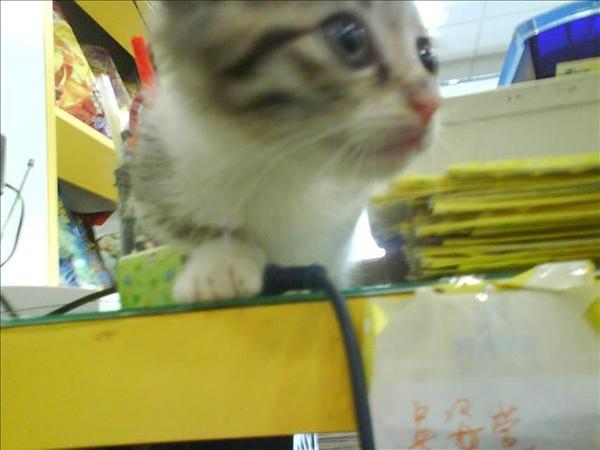 2007/12/2 玻斯帶著他的貓來訪十大