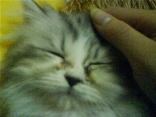 很乖很好睡
