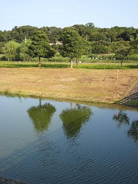 0825千波湖8.JPG