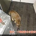 阿財巡工地 (5).jpg