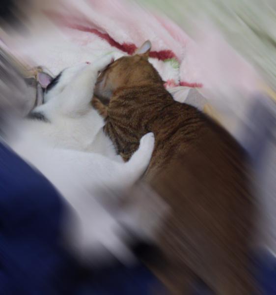 阿財與小熙20110203.jpg