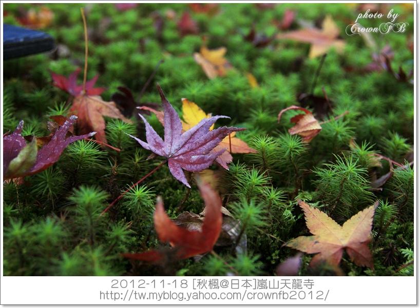 _MG_1806a 2012-11-18天龍寺.JPG
