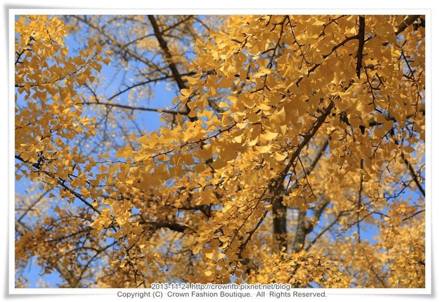 IMG_6378 2013-11-24京都.JPG