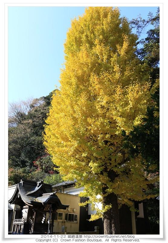 IMG_6574 2014-11-22城崎溫泉.JPG