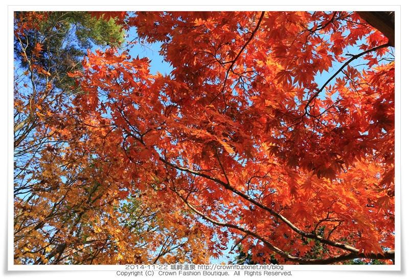 IMG_6614 2014-11-22城崎溫泉.JPG