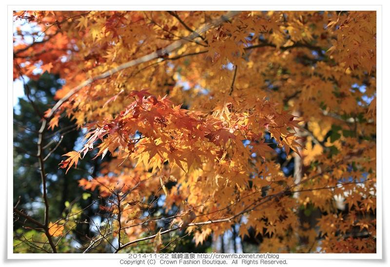 IMG_6617 2014-11-22城崎溫泉.JPG