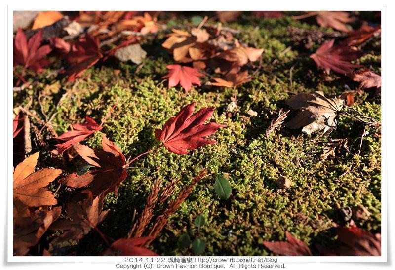 IMG_6650 2014-11-22城崎溫泉.JPG