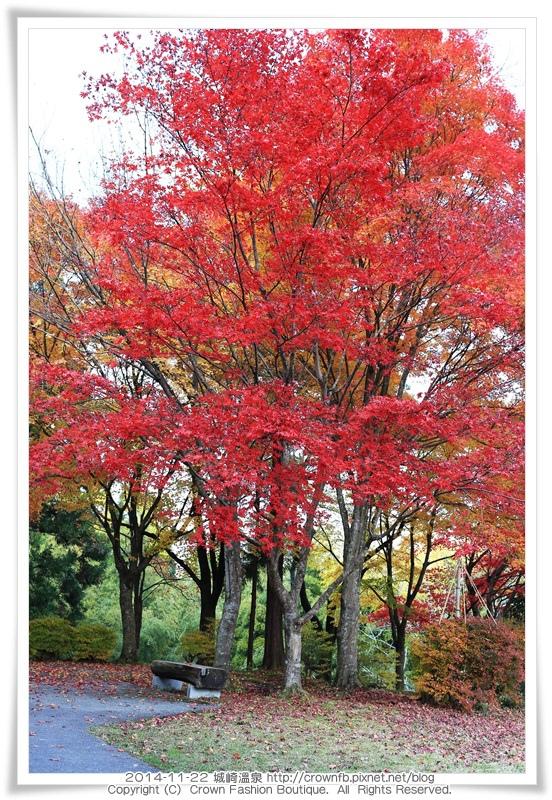 IMG_6667 2014-11-22城崎溫泉.JPG
