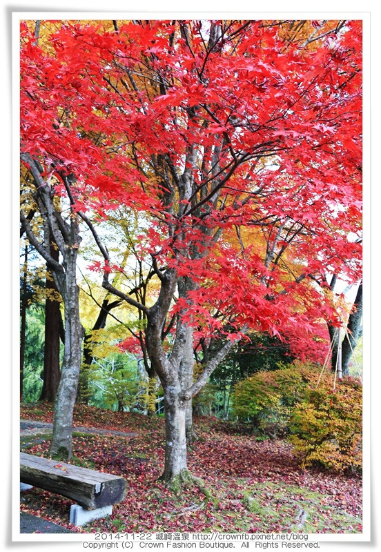 IMG_6669 2014-11-22城崎溫泉.JPG