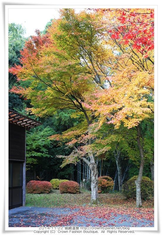 IMG_6668 2014-11-22城崎溫泉.JPG