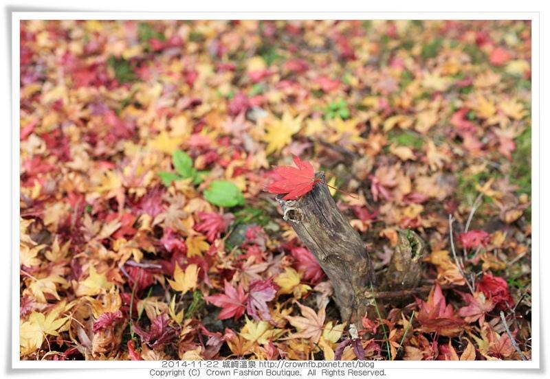 IMG_6674 2014-11-22城崎溫泉.JPG