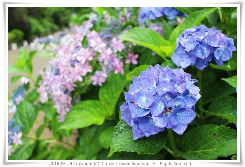 IMG_1378 2016-6-24日本.JPG