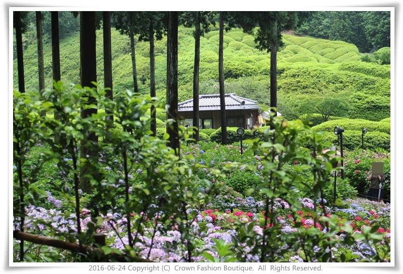 IMG_1392 2016-6-24日本.JPG
