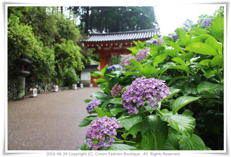 IMG_1398 2016-6-24日本.JPG