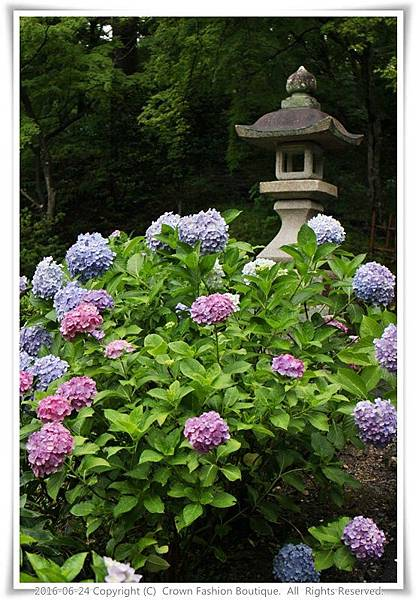 IMG_1417 2016-6-24日本.JPG