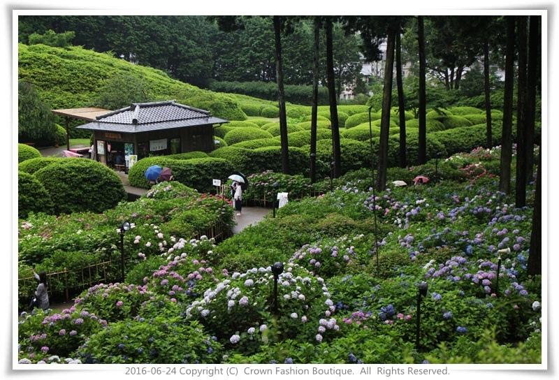 IMG_1412 2016-6-24日本.JPG