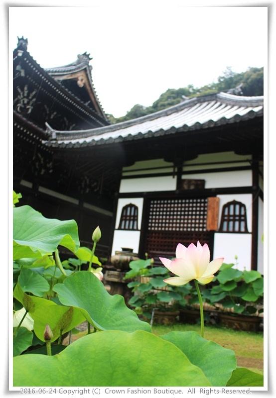 IMG_1457 2016-6-24日本.JPG