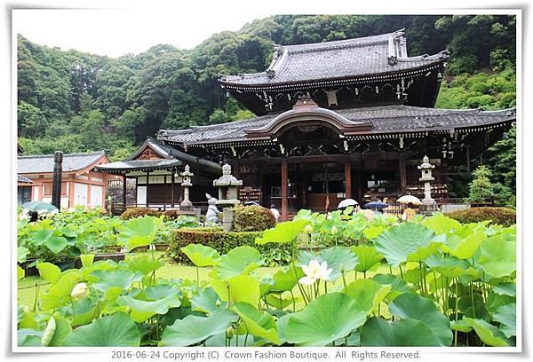 IMG_1443 2016-6-24日本.JPG