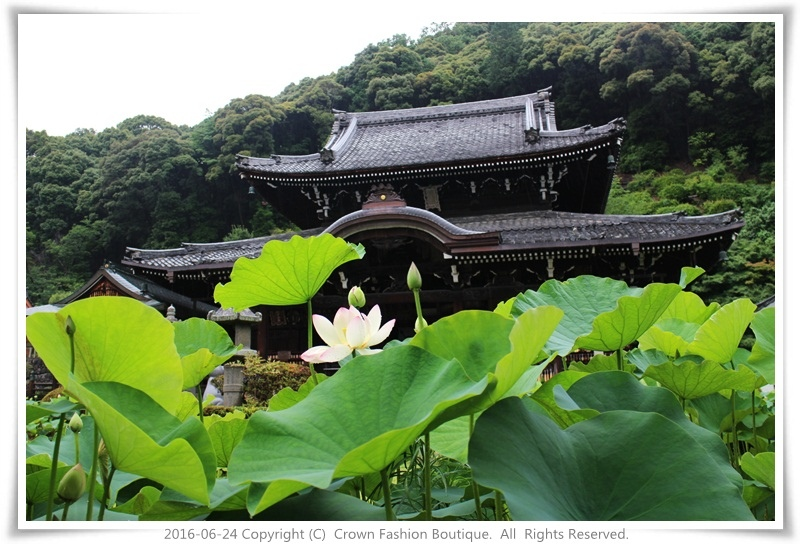 IMG_1445 2016-6-24日本.JPG