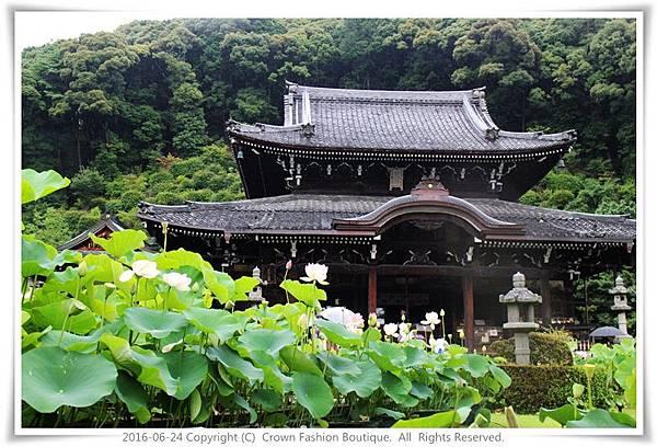 IMG_1467 2016-6-24日本.JPG