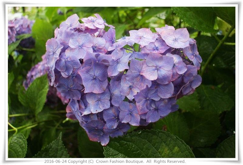 IMG_1505 2016-6-24日本.JPG