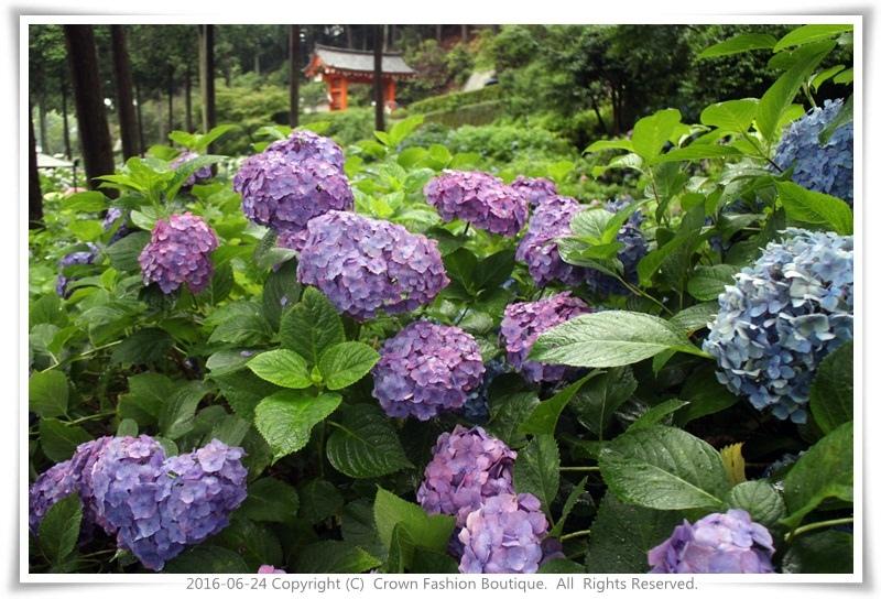 IMG_1501 2016-6-24日本.JPG